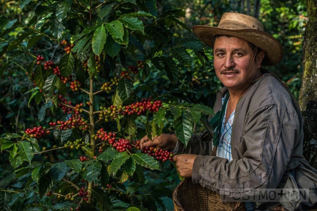 Manuel's Coffee Plant