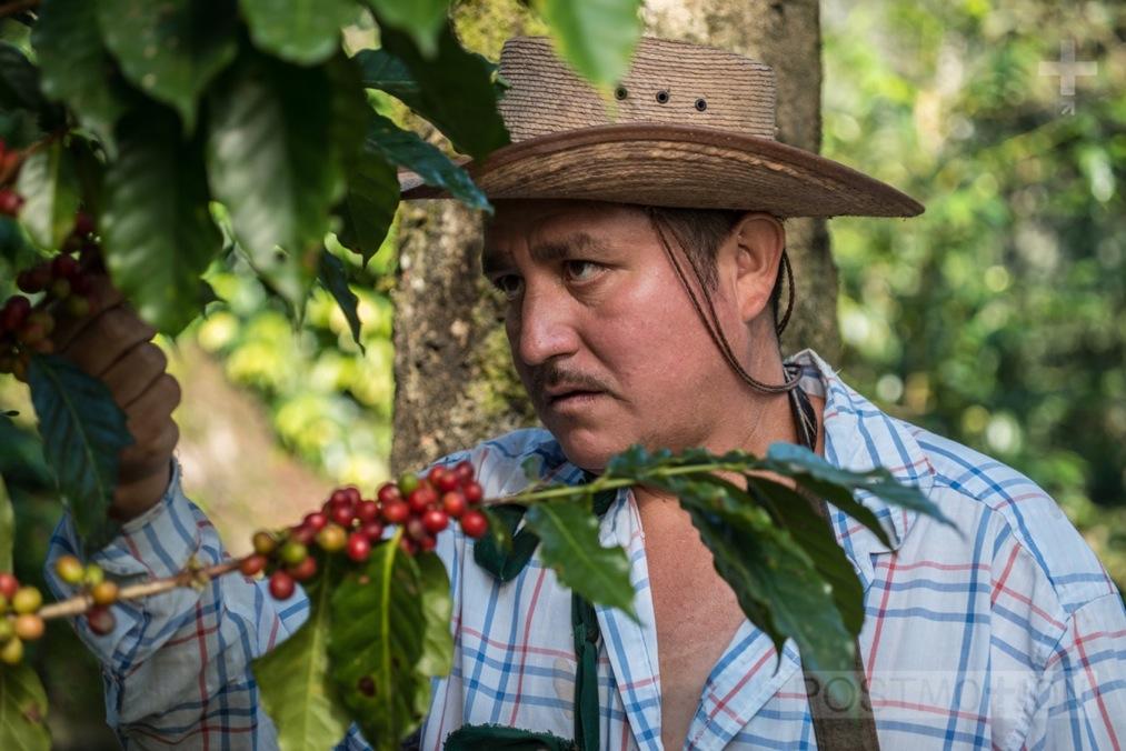 Manuel cherry picking